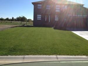 Lush Lawn_1